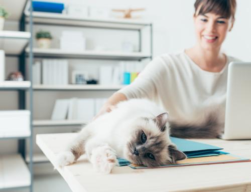 Travail à domicile : 3 conseils avisés pour rester productif